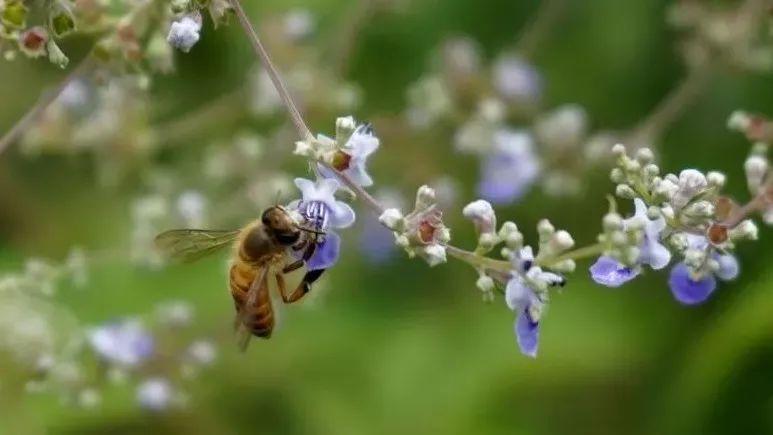 药店有卖蜂蜜的吗 醋和蜂蜜能减肥吗 油菜花蜂蜜+功效 2岁宝宝咳嗽能喝蜂蜜 蜂胶的作用与功效