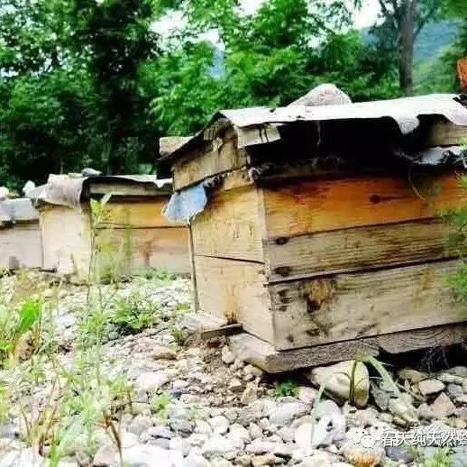 蜂蜜几勺 朝阳蜂蜜 早晨喝蜂蜜水好吗 蜂蜜。羊奶 蜂蜜猪油膏