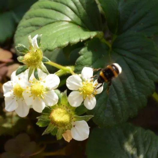十里花蜂蜜 蜂蜜和榴莲能一起吃吗 蜂蜜补雌激素吗 蜂蜜生姜水能减肥 蛇胆蜂蜜