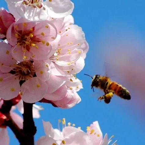 蜂蜜洗面奶 慈溪蜂蜜 寄蜂蜜怎么包装 蜂蜜早上喝好还是晚上喝 黄芪红枣枸杞蜂蜜
