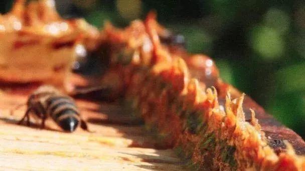 蜂蜜芝麻糊 怎样把蜂蜜熬熟 麦卢卡蜂蜜眼霜 广安邻水县包式蜂蜜 批发土蜂蜜