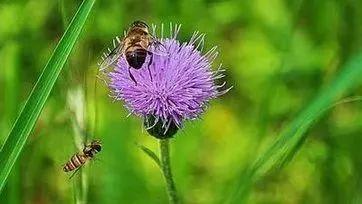蜂蜜水和豆浆 塑料瓶可以装蜂蜜吗 蜂蜜柚子丹哪有卖 蜂蜜柠檬水的英文 巫师3蜂蜜