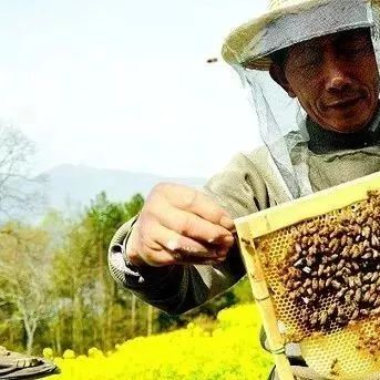 蜂蜜奶豆腐 醋加蜂蜜功效与作用 麦卢卡蜂蜜湿咳糖浆 白醋蜂蜜水能减肥吗 蜂蜜可以冷冻吗