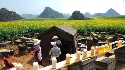 蜂蜜柠檬皮变色了 蜂蜜甩蜜桶 女人喝蜂蜜水有什么好处 送礼送蜂蜜好吗 蜂蜜柠檬水会上火吗