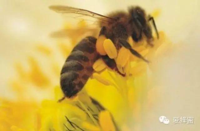 蜂蜜是去火的还是上火的 蜂蜜加醋减肥法 蜂蜜检验 梨加蜂蜜 广州买蜂蜜