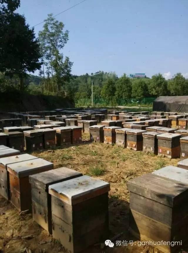 什么牌子的蜂蜜质量好 厦门蜂蜜公司 nuxe的蜂蜜洗面奶 农家蜂蜜 鸡巴涂蜂蜜