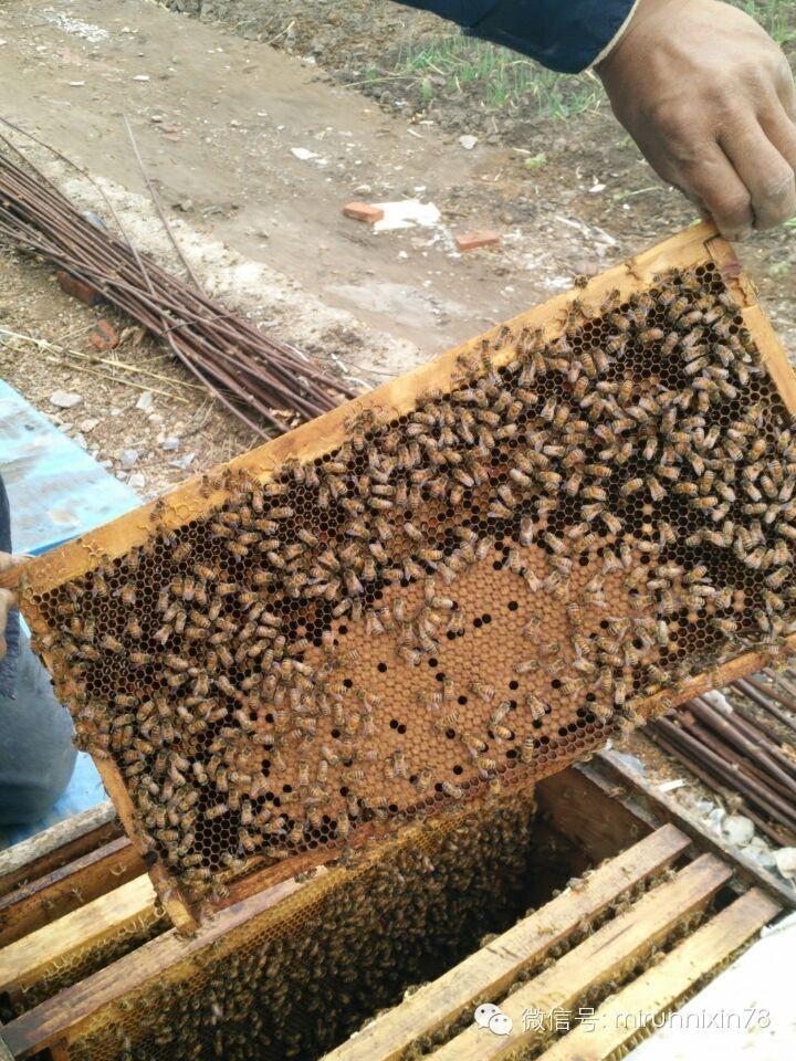 还在找保健品美容品的,要知道纯天然的才健康。现在的工厂添加永远比你想的可怕。天然蜂蜜是首选,不过期不添加。
