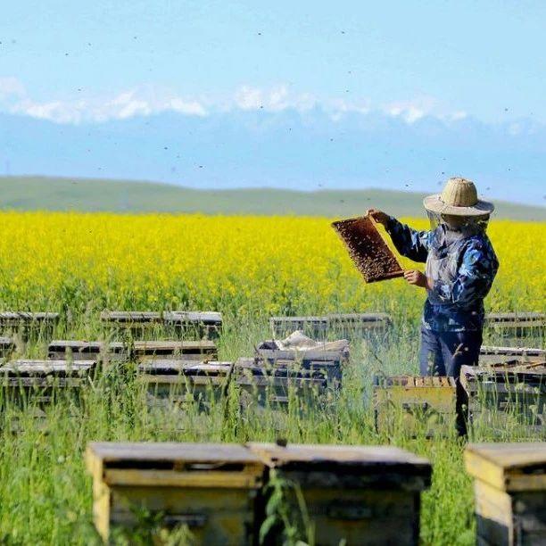 早晨喝蜂蜜水好吗 珍珠粉牛奶蜂蜜面膜怎么做 柠檬片加蜂蜜的功效 德国蜂蜜造假 百花蜂蜜价格
