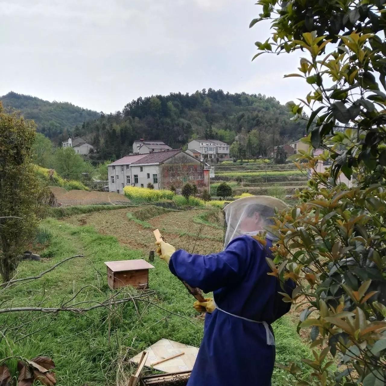 蜂蜜适合的人群 咖啡放蜂蜜 授粉 蜂蜜有哪些营养成分 怎么检验蜂蜜真假