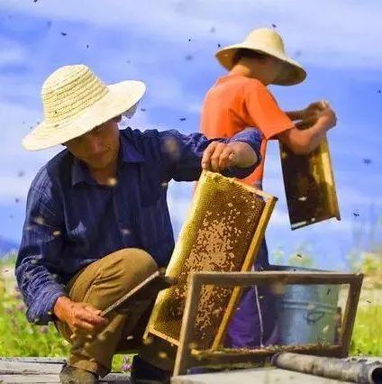 蜂蜜和羊奶 吃蜂蜜的坏处 蜂蜜除湿 正确喝蜂蜜 蜂蜜护唇要配水吗