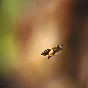 蜂蜜和葱 蜂蜜柠檬水的功效 茶配蜂蜜 蜂蜜减肥的正确吃法 白醋蜂蜜