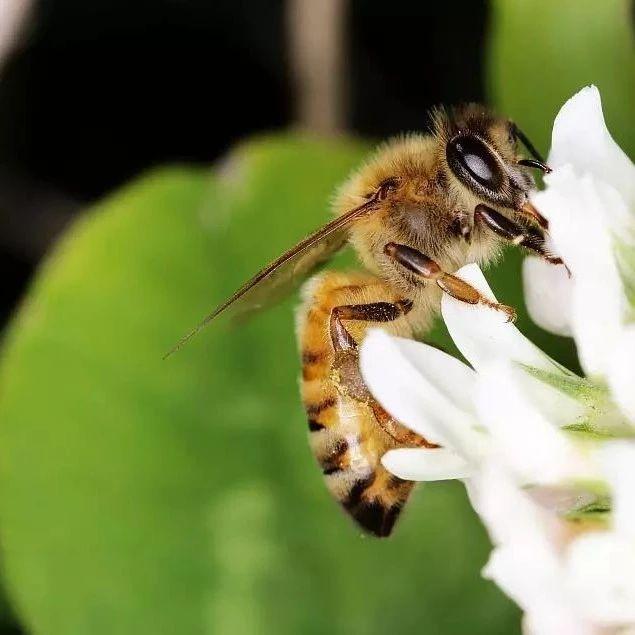 姜汤蜂蜜水的作用 蛋清蜂蜜面膜 早上每天一杯蜂蜜水 白萝卜蜂蜜止咳 蜂蜜红糖面膜