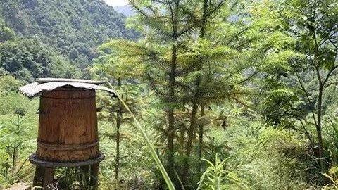 胆固醇可以吃蜂蜜吗 霉菌性阴炎可以喝蜂蜜吗 燕麦牛奶蜂蜜一起吃 蜂蜜冷藏白色 云波野山蜂蜜