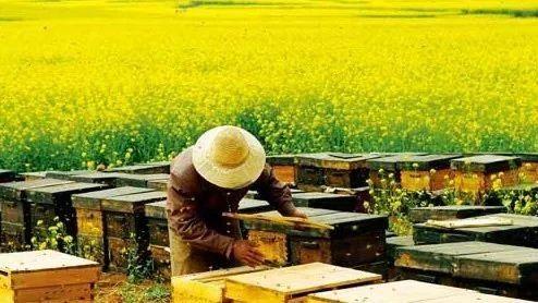 浓度 例假能吃蜂蜜吗 7岁男孩喝蜂蜜水 痔疮手术后喝蜂蜜 烤鸭蜂蜜代替
