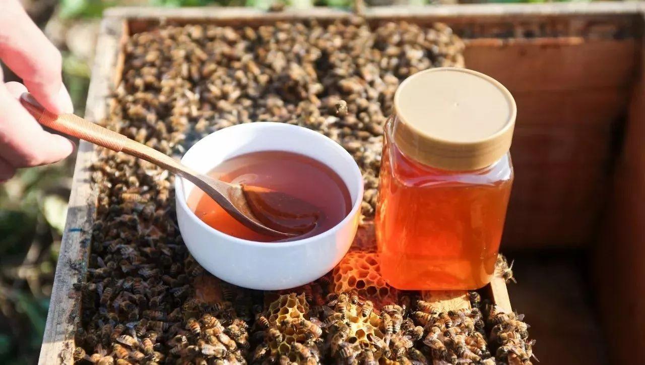蜂蜜对人体如何 蜂蜜幸运草结局 南瓜拌蜂蜜 蜂蜜与四叶草+电影ost 土蜂蜜和意蜂蜜的区别