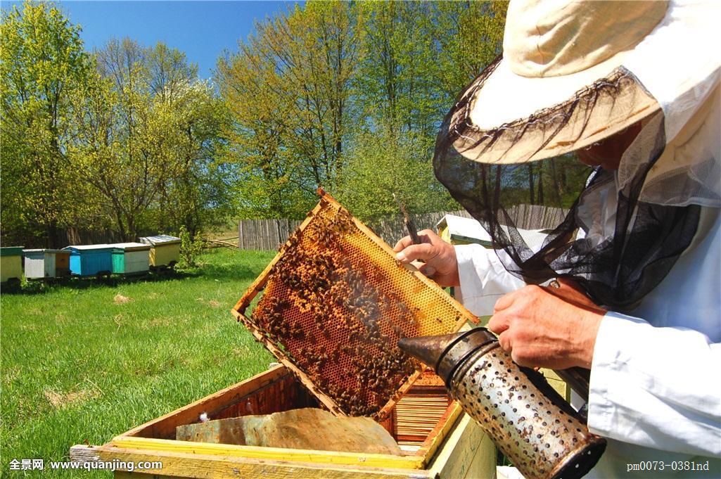 武夷山蜂蜜 蜂蜜治疗外伤 藕粉能加蜂蜜吗 dnf蜂蜜怎么得 蜂蜜可以过安检吗