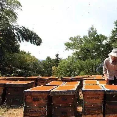 佰草百丽牛奶蜂蜜手蜡怎么样 喝了发酵的蜂蜜怎么办 假蜂蜜的制造配方 蜂蜜烫伤效果 生姜蜂蜜水起什么作用