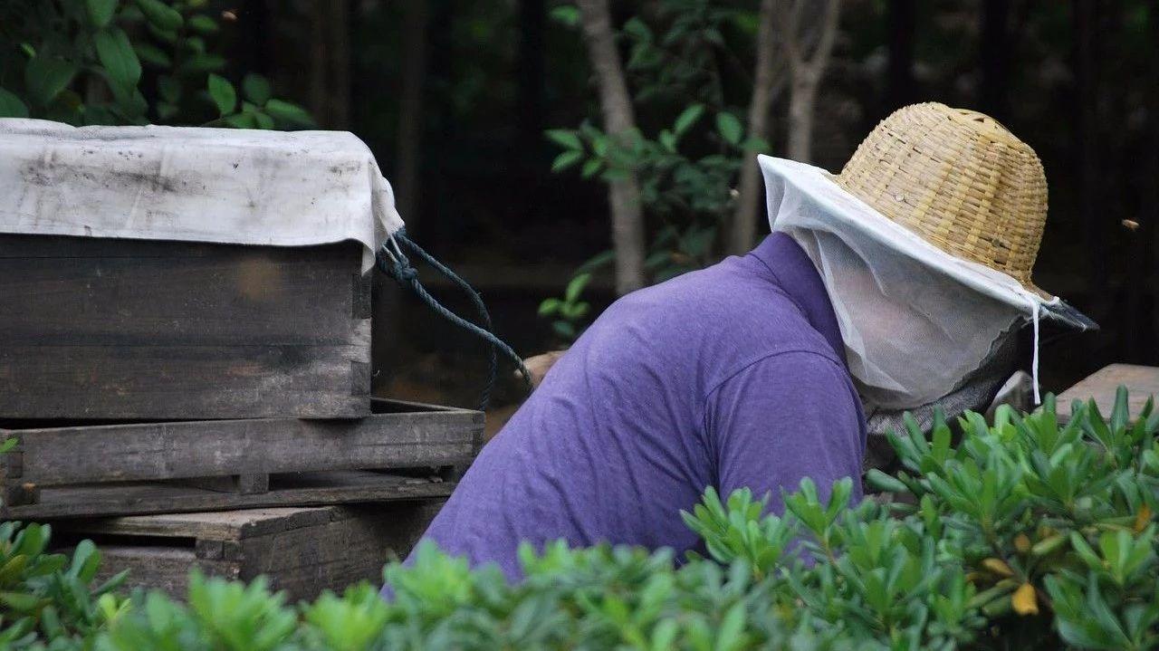 日本蜂蜜回国 我的蜂蜜歌曲播放 蜂蜜牛奶洗脸 薄荷加蜂蜜有什么功效 牛奶蛋清蜂蜜面膜的功效