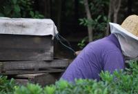 小作坊没有蜜蜂却产蜂蜜,色泽深浅竟全靠酱油勾兑!