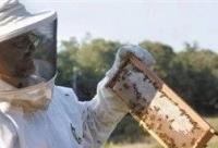 健康养生:有胃病要常吃蜂蜜!