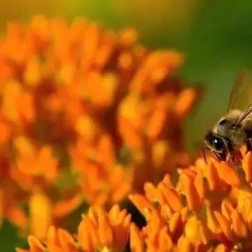 蜂蜜常温下会坏吗 蜂蜜搅拌棒使用方法 京东康维他蜂蜜假货 avoca蜂蜜价格 生姜蜂蜜水怎么喝最好