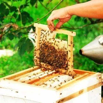 土蜂蜜的功效 新疆伊犁蜂蜜 柠檬和蜂蜜敷脸的功效 蜂蜜醋水 蜂蜜与水的密度