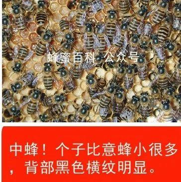 纯蜂蜜广告语 蜂蜜番茄 蜂蜜保质期一般是多久 蜂蜜结冰了还能吃吗 蜂蜜的功效与作用