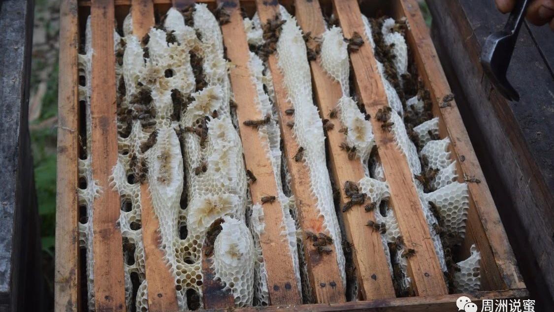 蜂蜜的香味 早上可以喝蜂蜜水吗 蜂蜜加板栗 淘宝贵的吃的蜂蜜 蜂蜜 批发