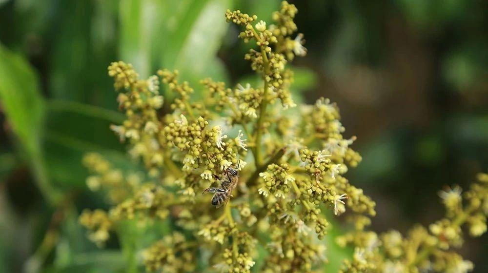 罗浮山蜂蜜在哪买 喝蜂蜜水的4大禁忌 最高级的蜂蜜 萝卜蜂蜜治咽炎 什么蜂蜜适合女性