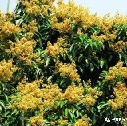 从国外进口蜂蜜 玉米粥蜂蜜 蜂蜜水助消化 蜂蜜和姜能一起喝吗 纯蜂蜜