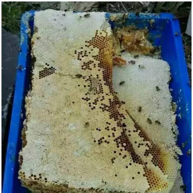 嚼着吃的蜂蜜 很多人没吃过