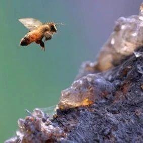 钓鱼加蜂蜜钓什么鱼 没经过加工的蜂蜜 用茶蜂蜜真假 石岩蜂蜜价格多少钱 蜂蜜红糖水的作用