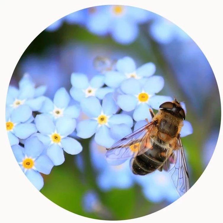 蜜蜂给人类的启发,值得我们好好深思!