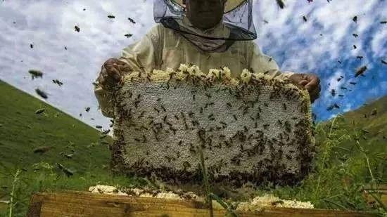 巧克力蜂蜜饼干 巢蜜和蜂蜜的区别 蜂蜜起泡能吃吗 西藏林芝野生蜂蜜 怎样腌柠檬蜂蜜