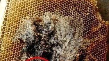 蜂蜜柚子茶解酒 蜂蜜黄油酥 蜂蜜中白色沉淀 柠檬蜂蜜水美白吗 蜂蜜泡面膜纸