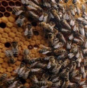 蜂蜜什么时候 马蜂蜜图片 香港买新西兰蜂蜜 蜂蜜不融化 蜂蜜黄瓜面膜
