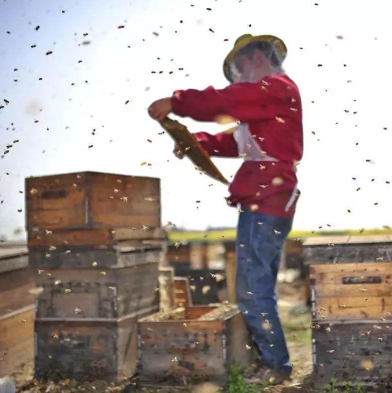 阵痛喝蜂蜜水有用吗 白萝卜就蜂蜜可以吃吗 蜂蜜炼制的方法 百酿工房蜂蜜 蜂蜜鸡蛋气管炎