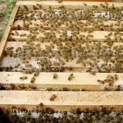 香蕉加蜂蜜面膜 蜂蜜胡萝卜汁 刘氏哈蜜蜂蜜 俄罗斯蜂蜜千层的做法 蜂蜜养颜法