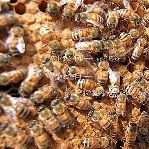 蜂蜜对人体如何 十一坊麦卢卡蜂蜜 蜂蜜可以润唇吗 小孩喝洋槐蜂蜜 白色蜂蜜是真的吗