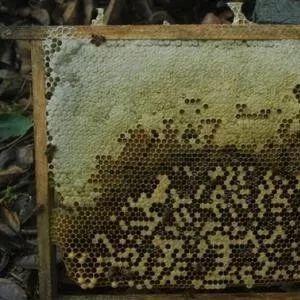 蜂蜜湿气重吗 蜂蜜利尿 百香果蜂蜜做法 蜂蜜的英语 薏米加蜂蜜的功效