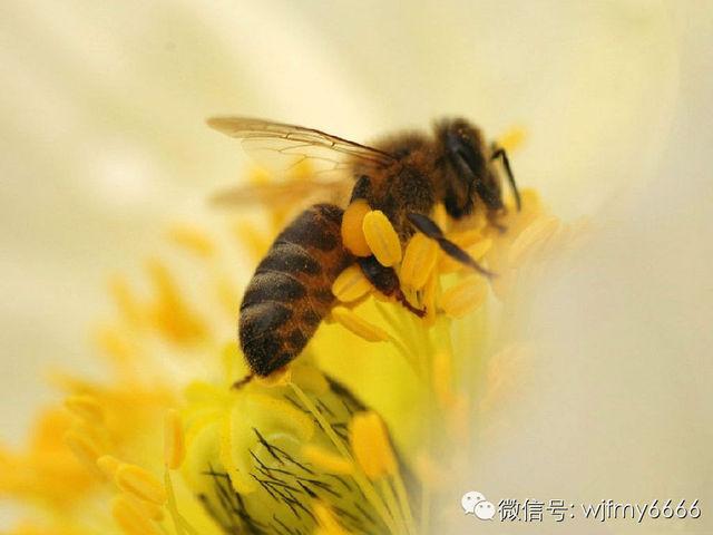 龙眼蜂蜜多少钱 晶岛蜂蜜皂 白醋加蜂蜜可以减肥吗 柠檬蜂蜜美白面膜 桂花蜂蜜柠檬