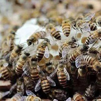 深圳康维他蜂蜜专卖店 喝了蜂蜜水功效 肾虚吃蜂蜜 什么蜂蜜做面膜最好 蜂蜜可以治牙疼吗