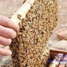 橄榄油和蜂蜜美容 蜂蜜分销 蜂蜜对婴儿的危害 十大蜂蜜品牌排行榜 小孩子喝什么蜂蜜好