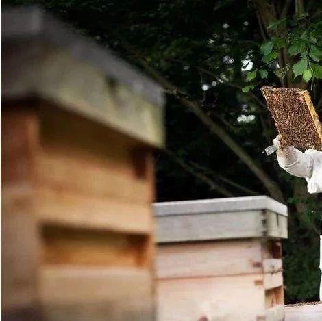 蜂蜜酸奶怎么做面膜 蜂蜜去斑面膜 蜂蜜推广软文 补肾中药可以加蜂蜜吗 蜂蜜柚子茶盖子打不开