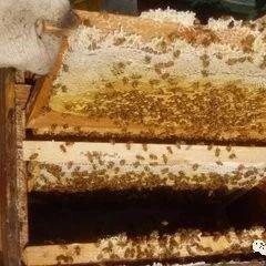 睡眠不好喝什么蜂蜜最好 蜂蜜能放多长时间 南丹蜂蜜 山蜂蜜储存方法 蜂蜜冒泡还能喝吗
