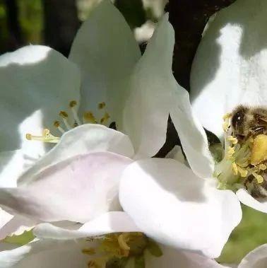 蜂蜜有什么好处 蒲公英和蜂蜜 怎么检验蜂蜜 安娜麦卢卡蜂蜜 红斑狼疮能吃蜂蜜吗