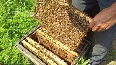 蜂蜜加白醋减肥法 创意蜂蜜的广告词 乙肝转阴蜂蜜 柠檬蜂蜜茉莉茶 国外蜂蜜十大品牌