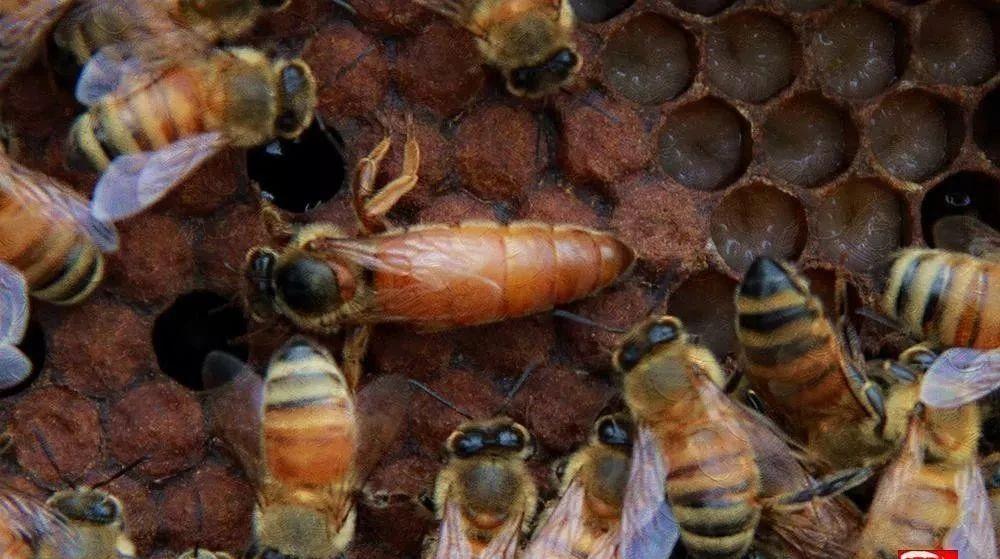 蜂蜜解疲劳 鸡蛋与蜂蜜能同食吗 痛经吃蜂蜜 蜂蜜可以治咽炎吗 刺梨加蜂蜜