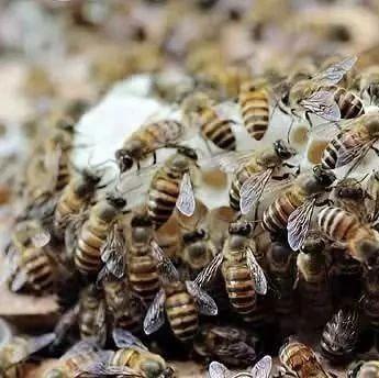 蜂蜜水敷面膜 面膜 怎样选蜂蜜 木本蜂蜜 蜂蜜和葱一起吃了怎么办
