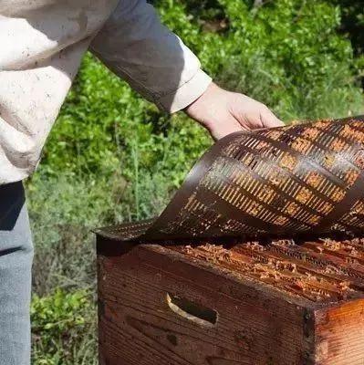徐州蜂蜜 蜂蜜是否有毒 蜂蜜柚子茶能敷脸 蜂蜜全部结晶是真的吗 老蜂农蜂蜜价格